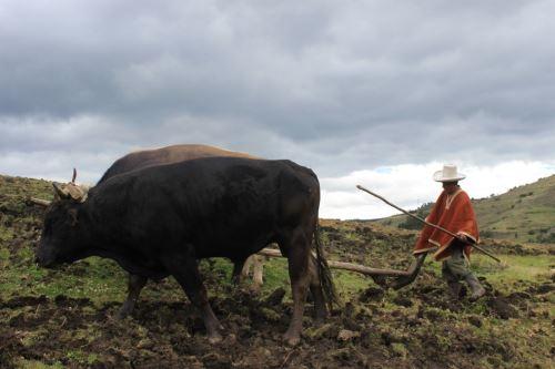 Productor pecuario. Foto: ANDINA/Difusión