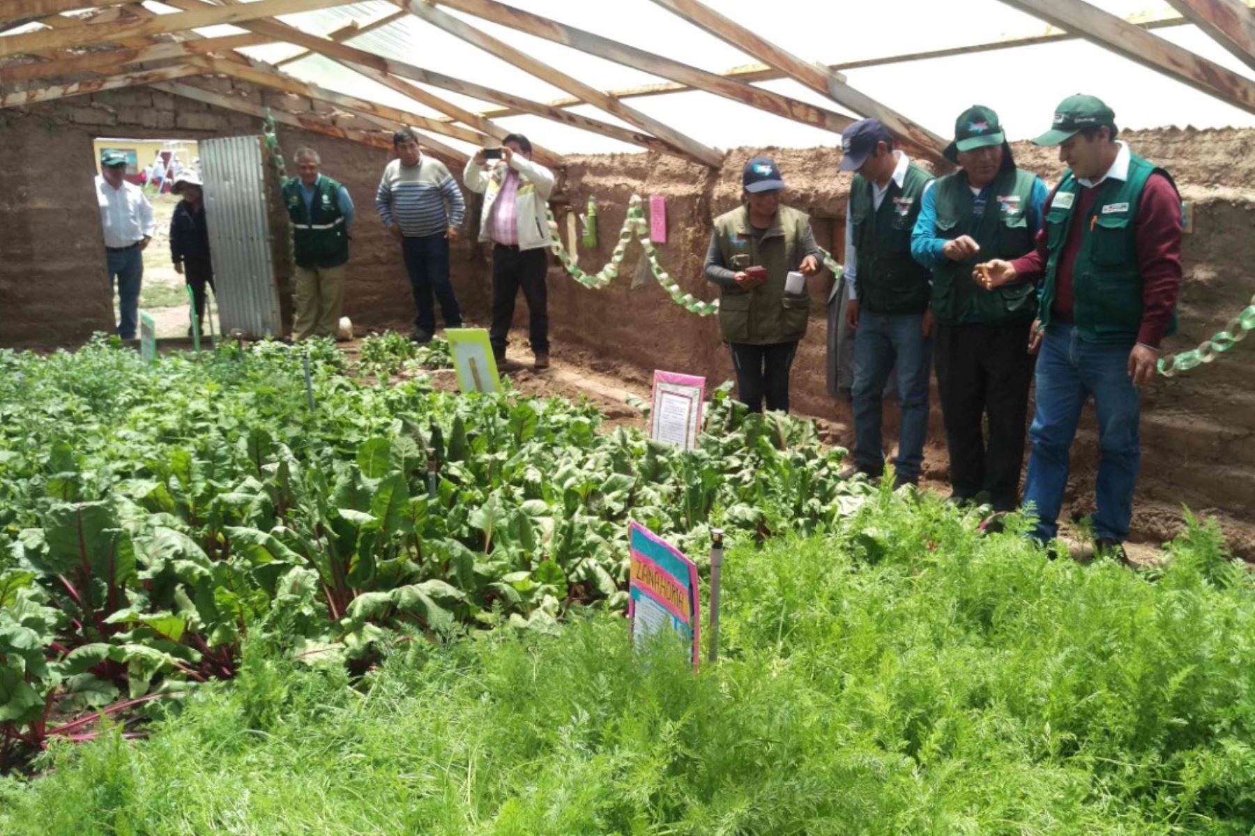 Agro Rural instaló 1,082 fitotoldos a escala nacional y este año implementará otros 2,163.