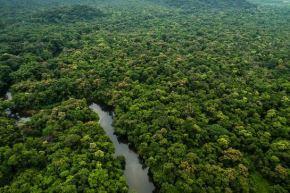 El Minam informó que la deforestación de bosques húmedos amazónicos en Perú significó una reducción de 4.7 % en comparación a lo reportado en el 2018.