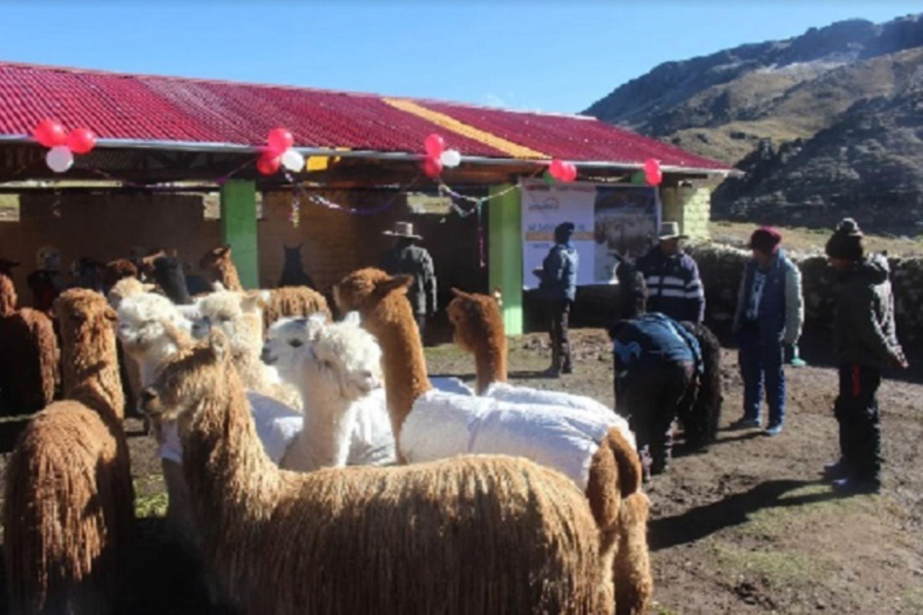 Agro Rural implementará este año 2,985 cobertizos en 12 departamentos del país