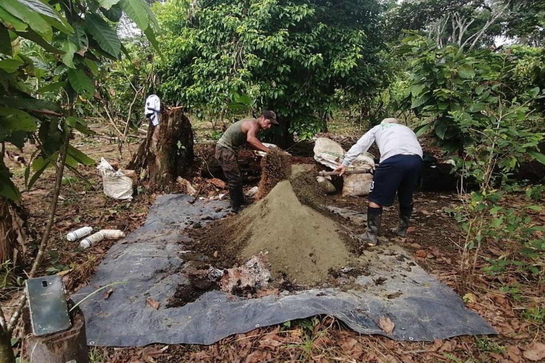Cacaoteros de Loreto aprenden técnicas de fertilización para mejorar cultivos