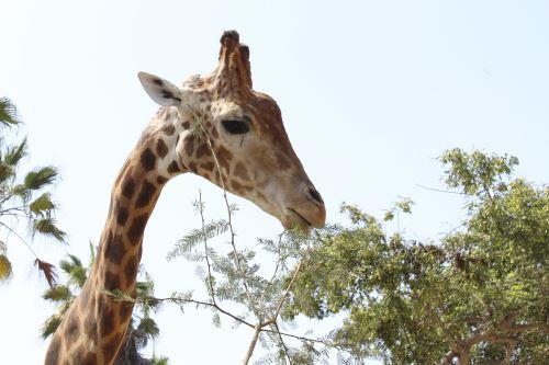 Coronavirus: Nacen crías en el Parque de las Leyendas durante cuarentena