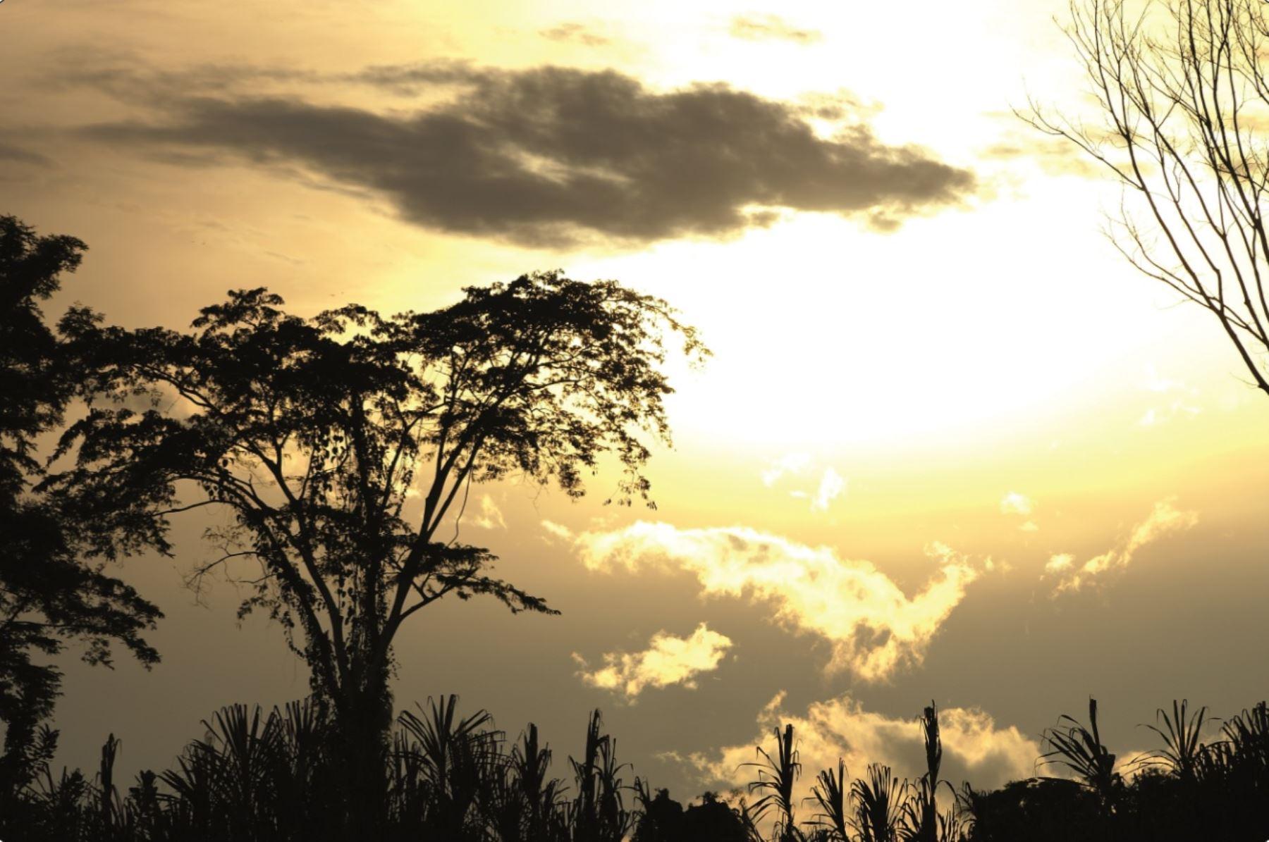 El bosque amazónica peruano constituye un espacio de gran potencial para las iniciativas de conservación.