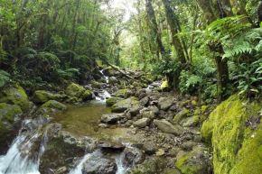 La Reserva de Biósfera Oxapampa-Asháninka-Yanesha, ubicada en la selva de la región Pasco, celebra su décimo aniversario de reconocimiento internacional por la Un esco, a través del Consejo Internacional de Coordinación del Programa sobre el Hombre y la Biósfera.ANDINA/Difusión