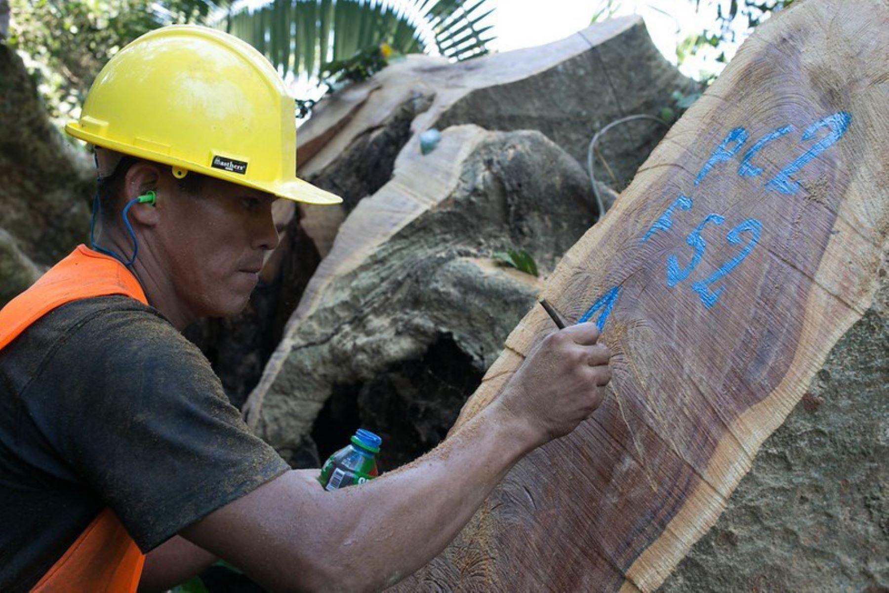 Recursos maderables del Perú.