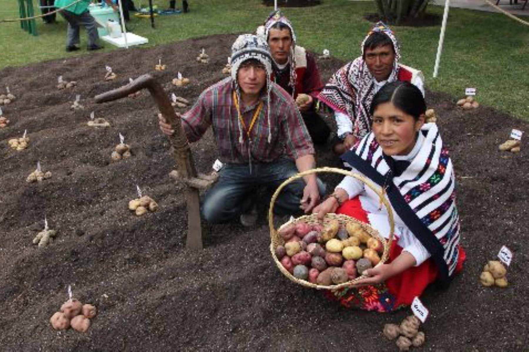 """Gracias a su enorme agrobiodiversidad y la salvaguarda de cultivos con el conocimiento ancestral de las comunidades campesinas, el Perú es uno de los 22 países del planeta que forma parte del programa """"Sistemas Importantes del Patrimonio Agrícola Mundial"""" (SIPAM), de la Organización de las Naciones Unidas para la Alimentación y la Agricultura (FAO). ANDINA/Difusión"""