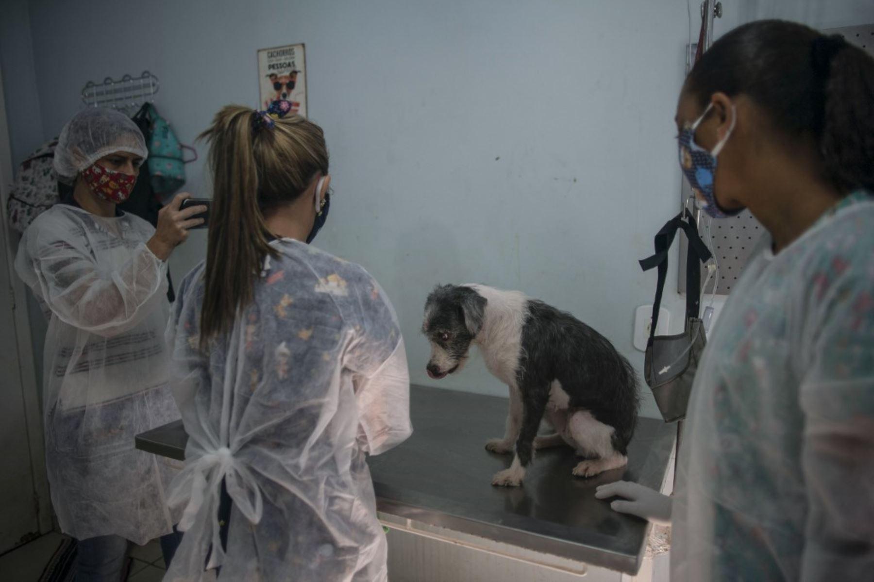 Los veterinarios toman una foto mientras revisan a un perro antes de llevarlo a su nuevo hogar en el Refugio Público de Animales del barrio de Guaratiba, en Río de Janeiro, Brasil. Foto: AFP