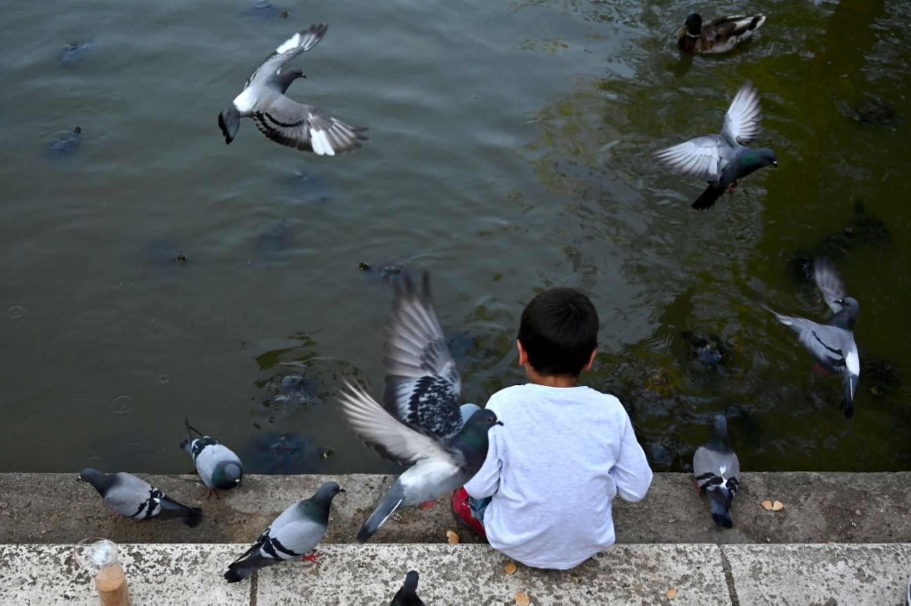 Un niño alimenta palomas en el Parque del Retiro de Madrid. Foto: AFP