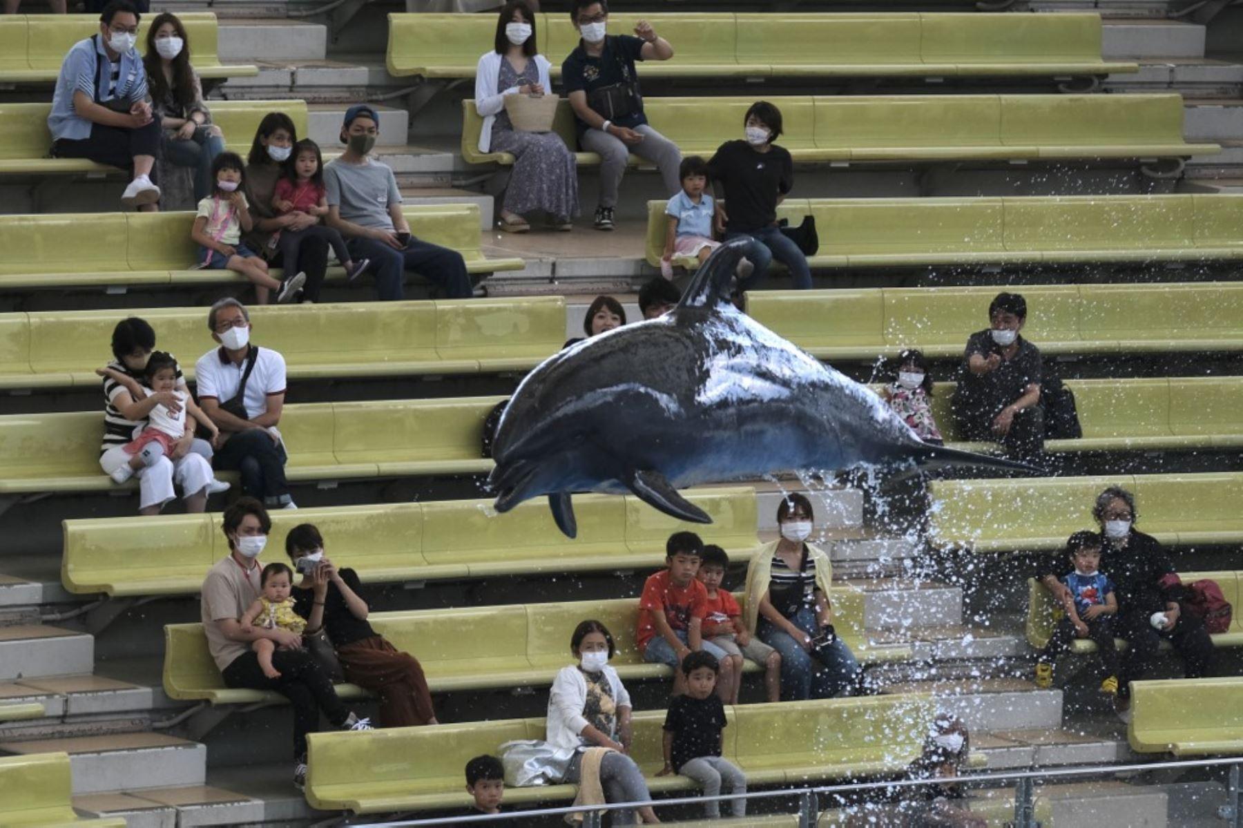 Los visitantes miran un espectáculo de delfines en el parque temático Hakkeijima Sea Paradise, que fue reabierto después de aproximadamente dos meses, en Yokohama. Foto: AFP