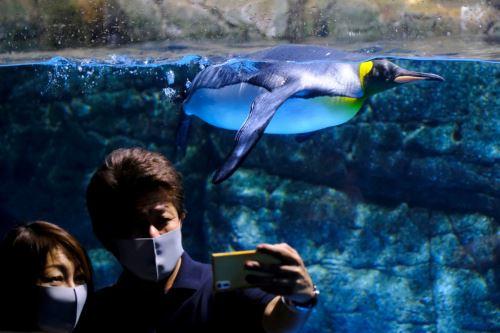 Coronavirus: Japón reabre sus lugares turísticos con medidas para evitar un rebrote de covid-19