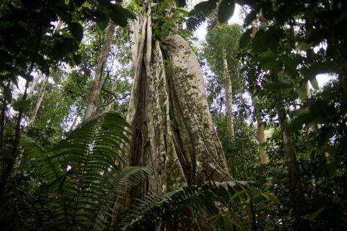En el marco del Día Mundial del Medio Ambiente, celebrado hoy y cada 5 de junio desde 1974.