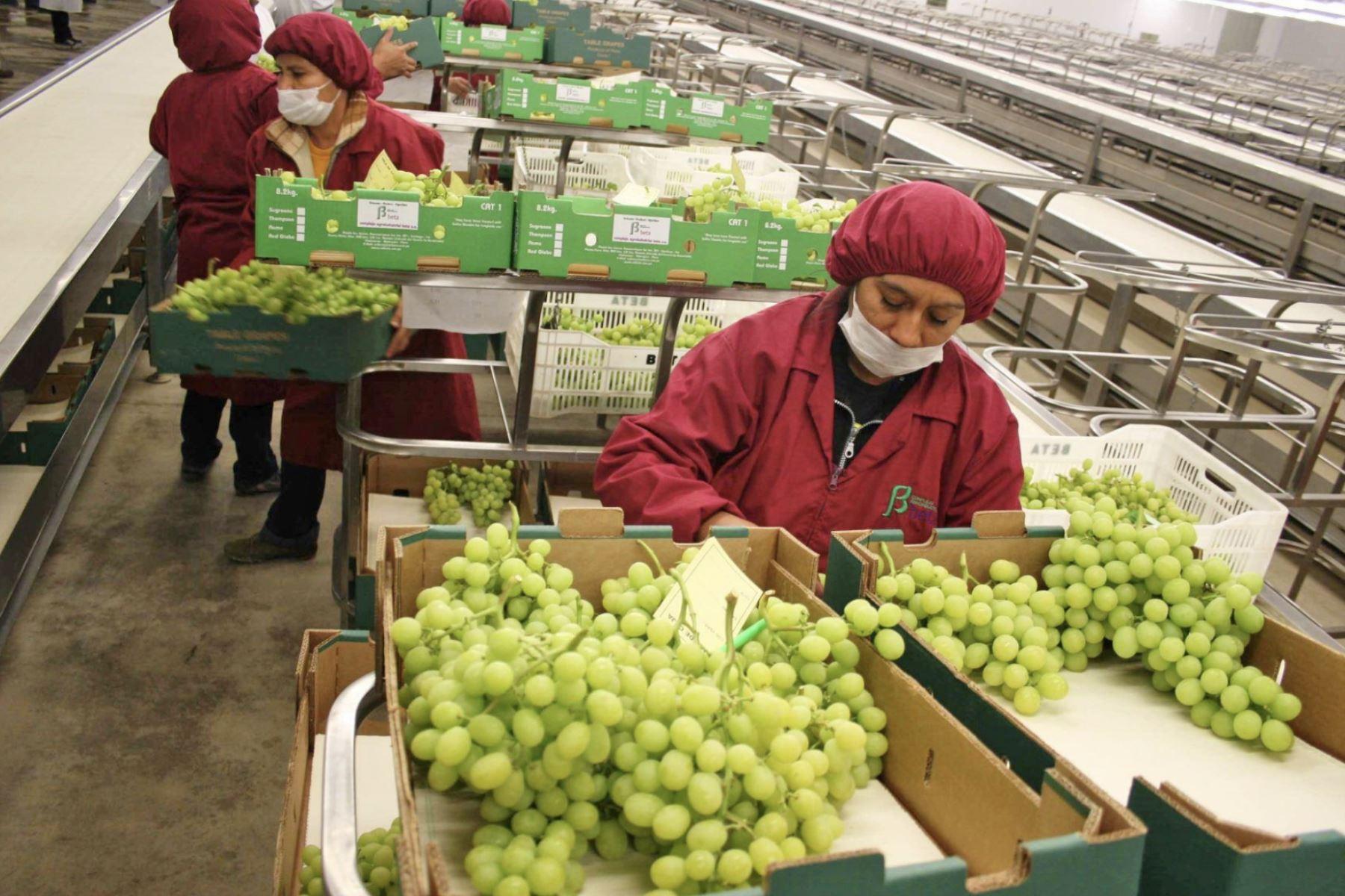 Agroindustria y minería atraerían inversión extranjera al Perú tras pandemia
