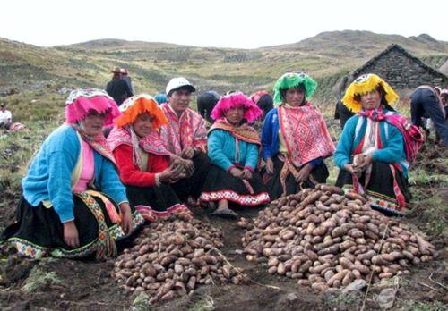 La reforma se impulsará desde el Midagri, con la movilización y capacitación de los productores agrarios. ANDINA/Difusión