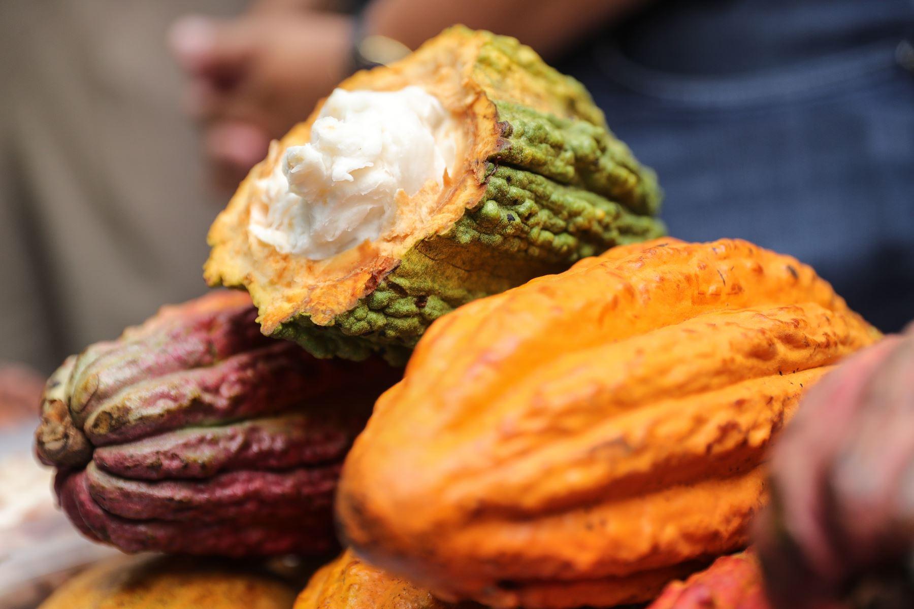 Perú atesora uno de los mejores cacaos del mundo, que es usado por fabricantes de chocolate de élite. Foto: ANDINA/Difusión