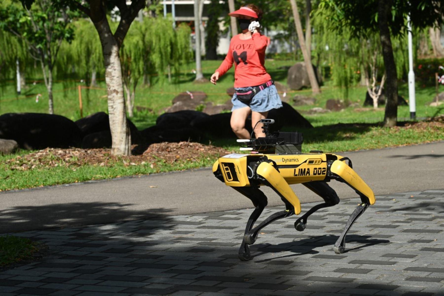 Una mujer pasa corriendo junto a un robot de cuatro patas llamado Spot, que transmite un mensaje grabado que recuerda a las personas que observen el distanciamiento seguro como medida preventiva contra la propagación del nuevo coronavirus COVID-19, en Singapur. Foto: AFP