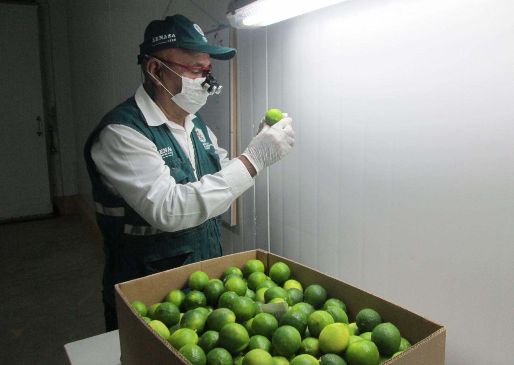 Región San Martín apuesta por el cultivo de limón tahití con fines de exportación. ANDINA/Difusión