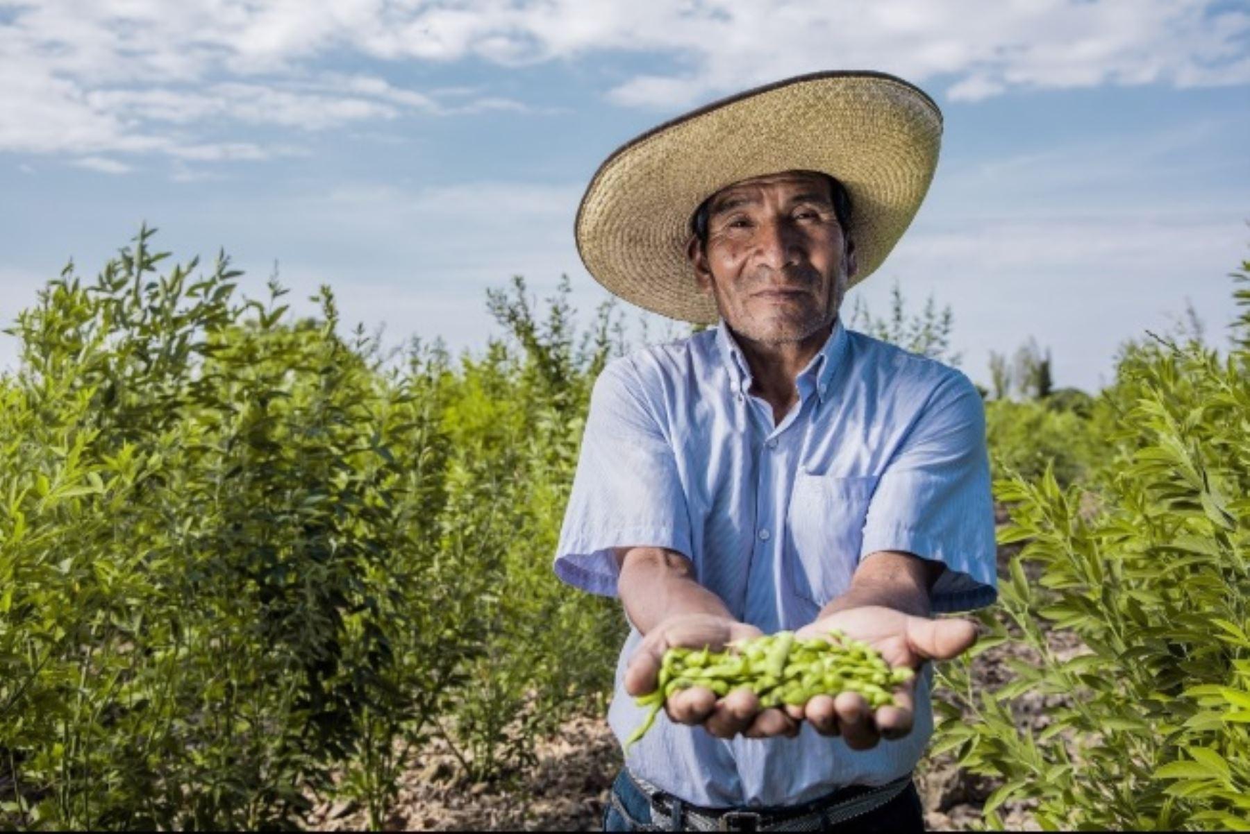 Agricultor. Foto: ANDINA/Difusión