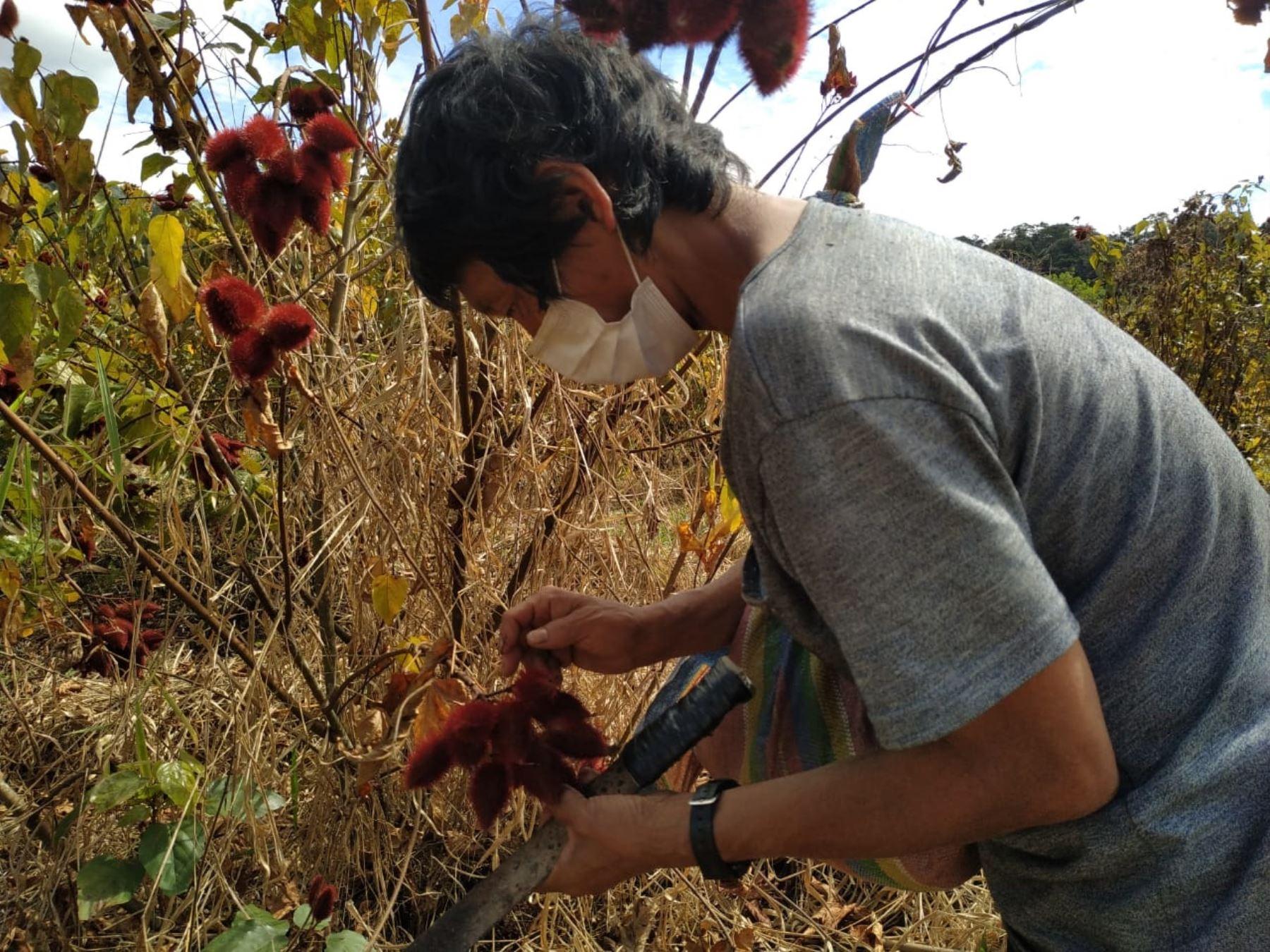 Programa PAIS del Midis entrega mascarillas a agricultores de comunidad indígena matsigenka de Cusco. ANDINA/Difusión