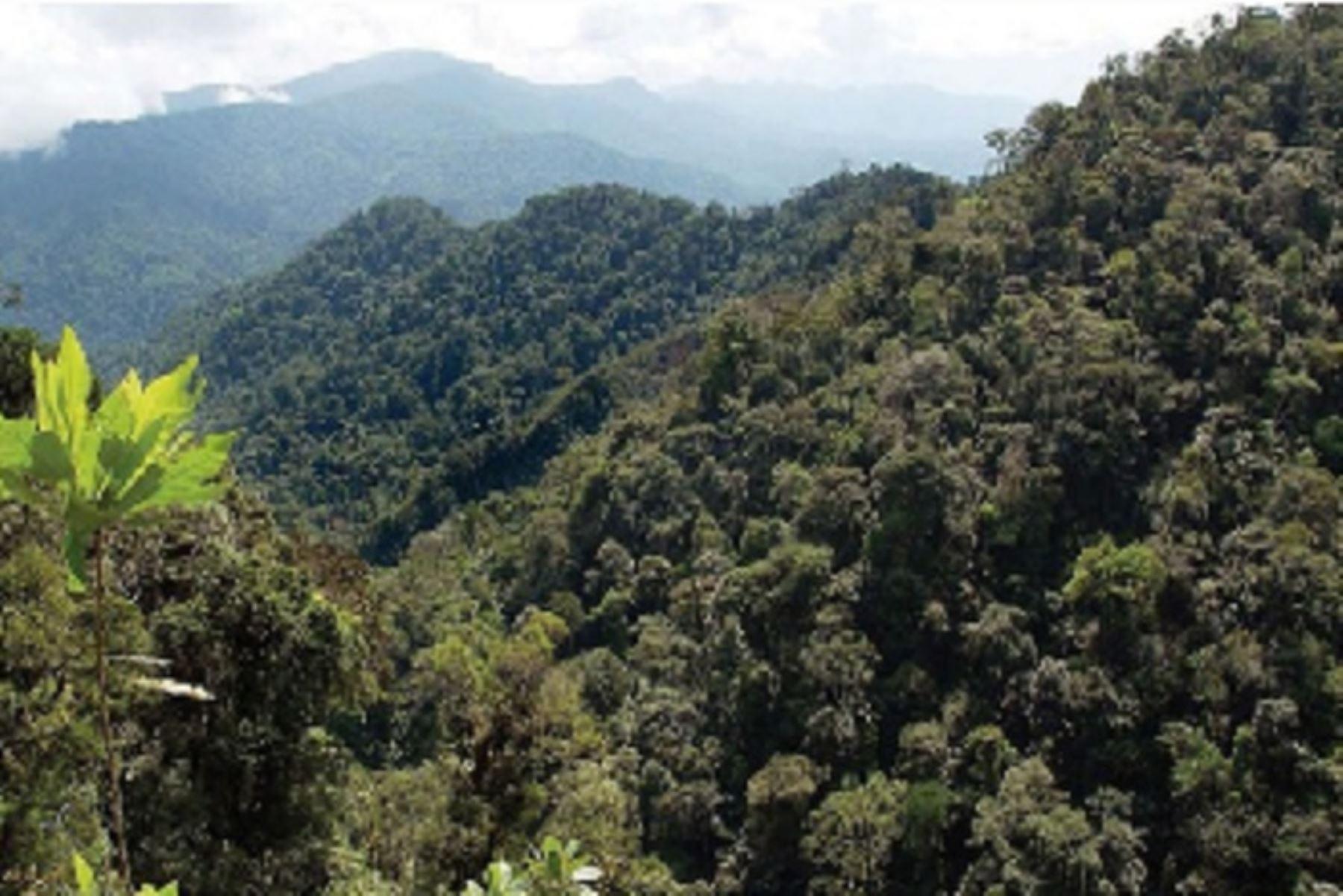El programa Bosques logró que 274 comunidades indígenas y campesinas de nueve departamentos accedieran a un incentivo económico para el desarrollo de sus actividades productivas sin deforestación.