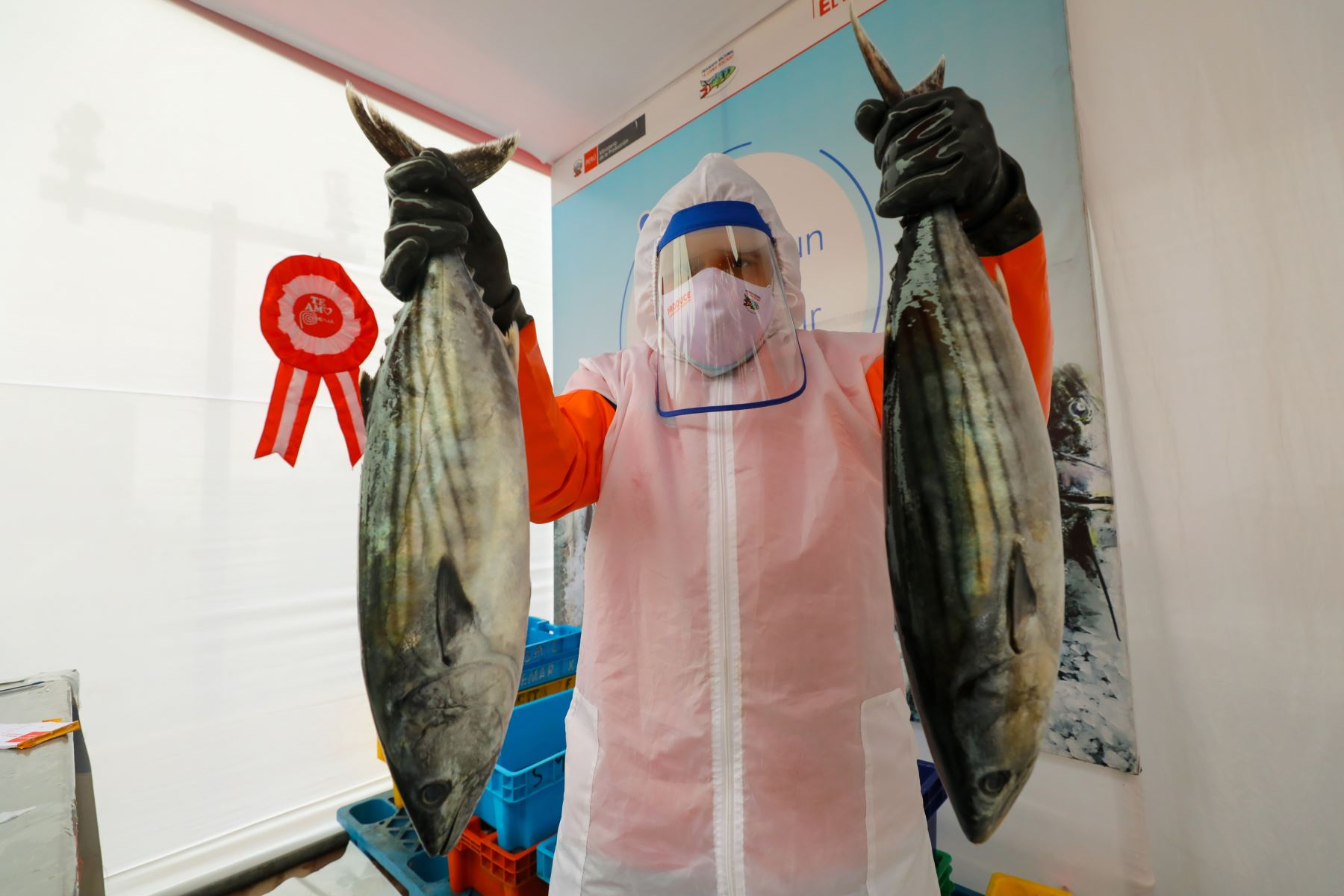 La importancia de consumir pescados azules como anchoveta, caballa, atún o jurel, entre otros del biodiverso mar peruano, se encuentra en la alta cantidad de nutrientes como la vitamina D que aportan en una dieta balanceada para robustecer el sistema inmune frente a amenazas como el coronavirus y otras enfermedades. ANDINA/Difusión