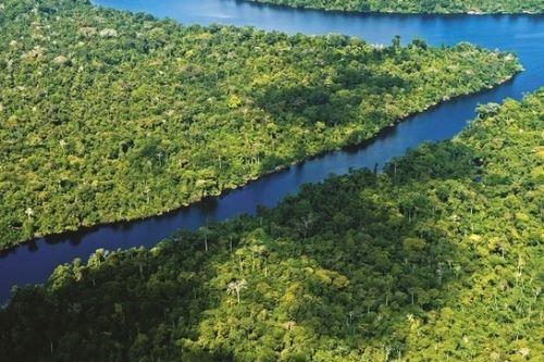 Sector Ambiente es el primero de la administración pública en medir su huella de carbono. Selva amazónica. Foto: ANDINA/Difusión.