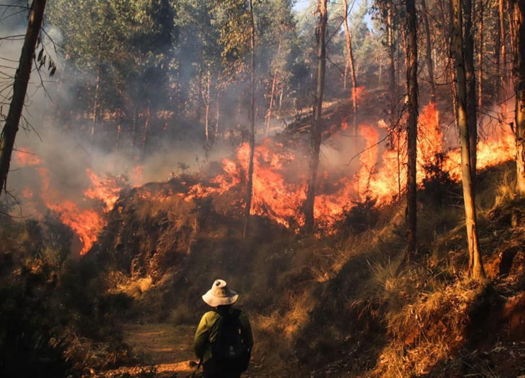 Más de 50 personas resultaron heridas en Cusco cuando intentaban sofocar un incendio forestal. ANDINA/Archivo
