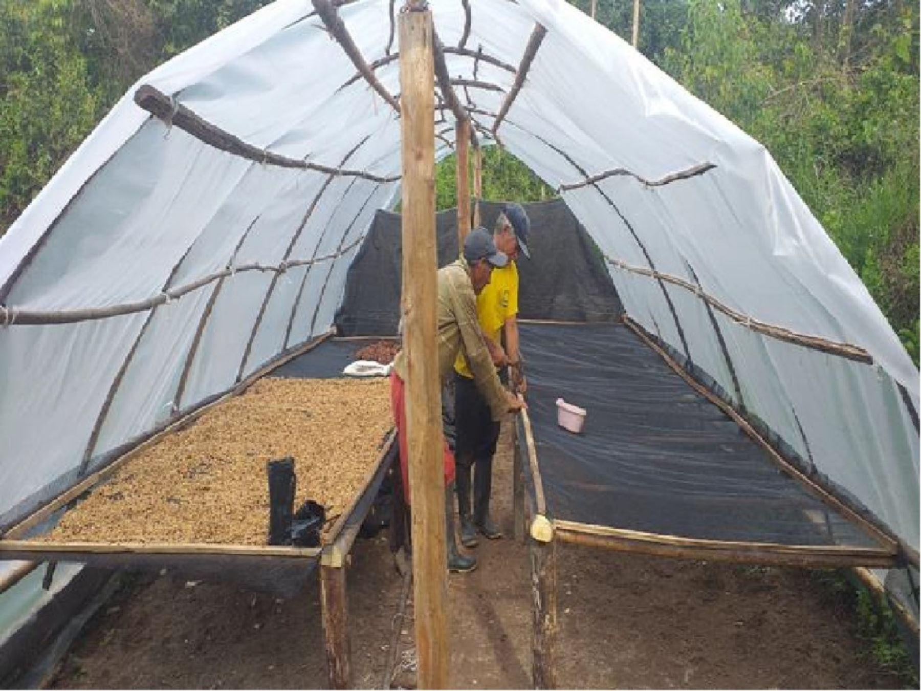 Agricultores indígenas kichwas de San Martín, y Shawi de Loreto apuestan por la tecnología para mejorar producción agrícola. Foto: Difusión/Foncodes