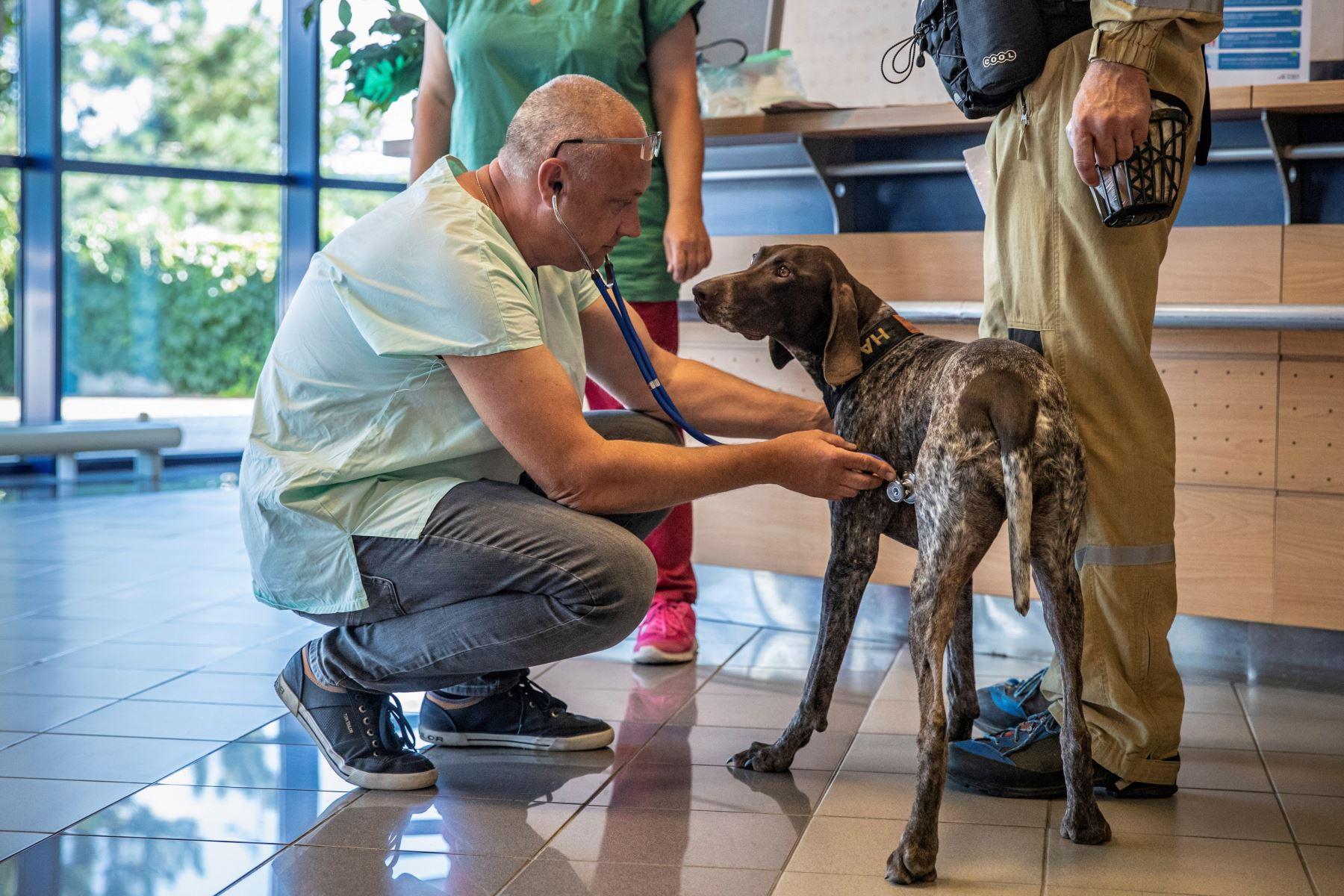 El personal checo de búsqueda y rescate urbano (USAR) con sus perros espera el control de salud del perro en el aeropuerto con rumbo a Beirut para apoyar en las operaciones de rescate. Foto: EFE