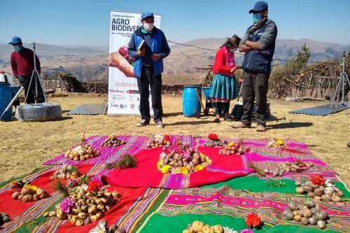 Minam reconoce a más de 3300 familias de productores conservacionistas de nuestra agrobiodiversidad