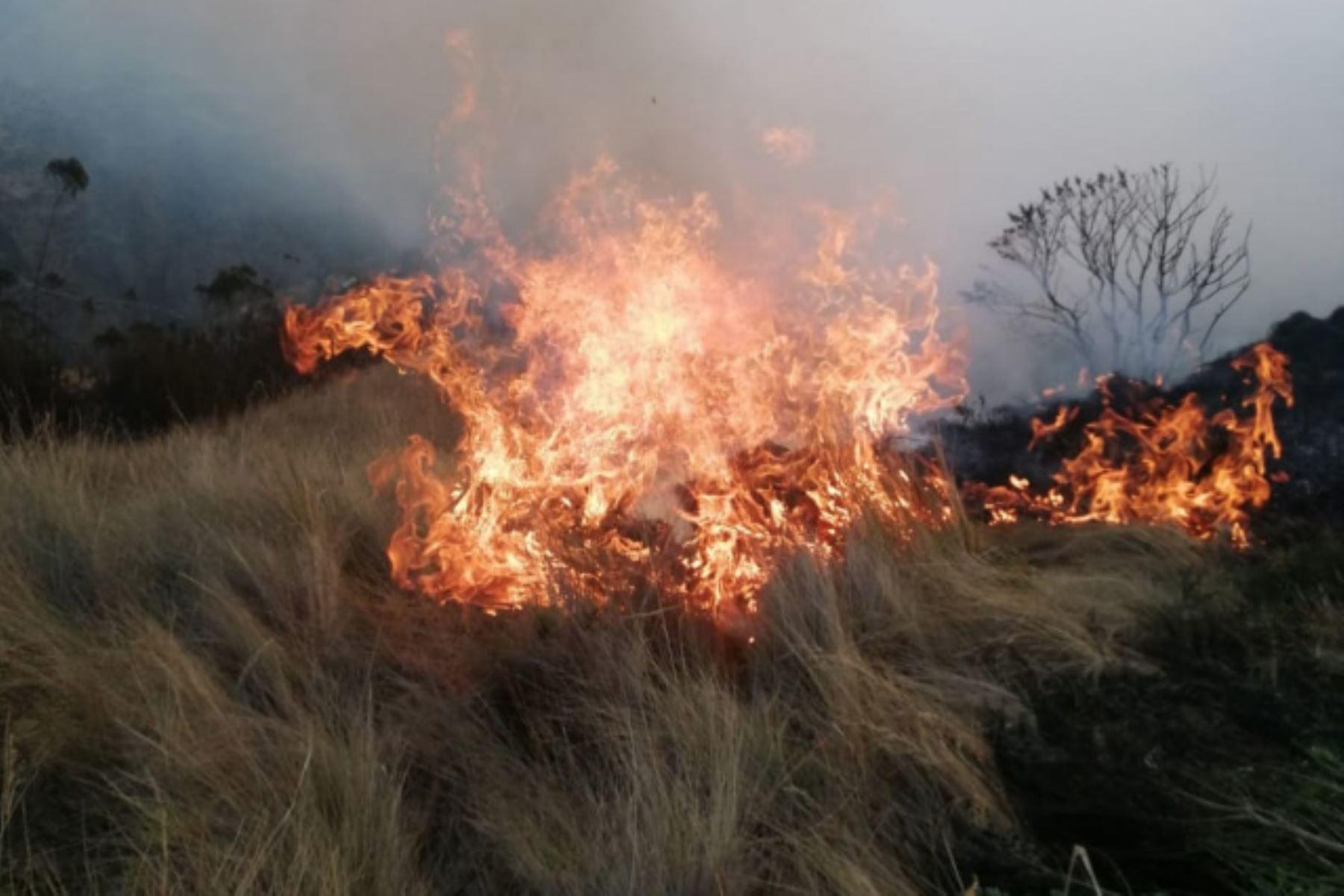 Incendio forestal en distrito de Ocongate, en Cusco, deja 8 muertos y 35 heridos, informó la Policía Nacional. ANDINA/Difusión