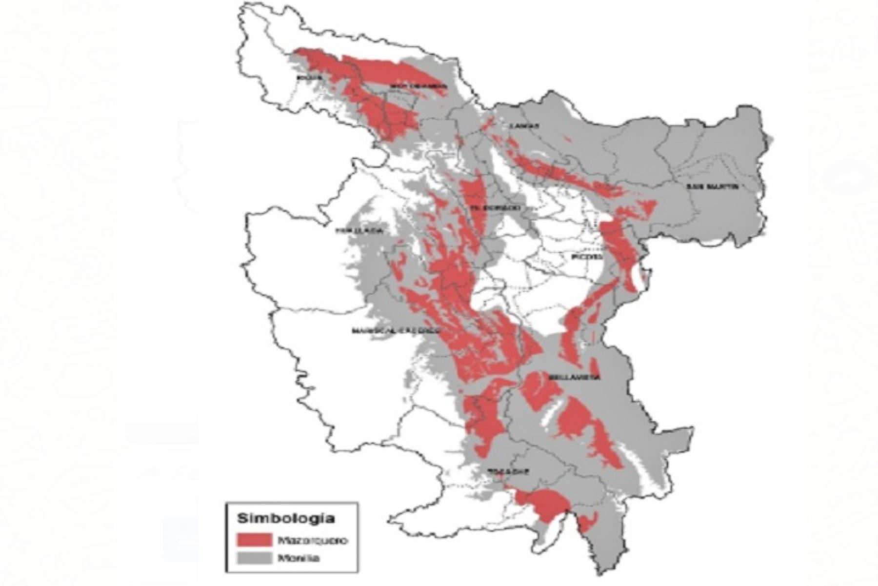 El cultivo del cacao tiene una gran relevancia económica, social y ambiental para la región San Martín, constituyéndose en una especie primordial del sistema agroforestal.