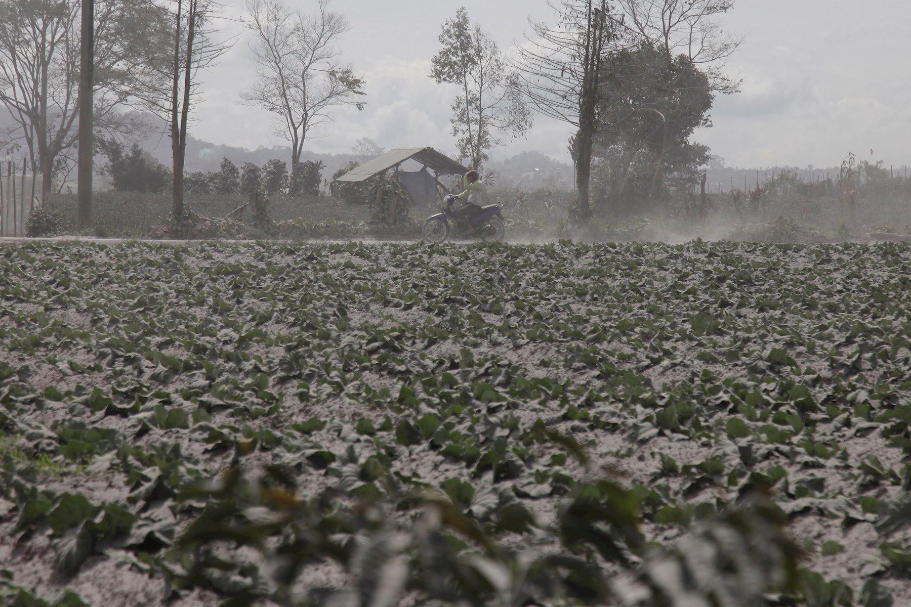 El volcán Sinabung arroja ceniza durante su segunda erupción hacia el anochecer, visto desde el distrito de Karo, en el norte de Sumatra, Indonesia. Foto: EFE