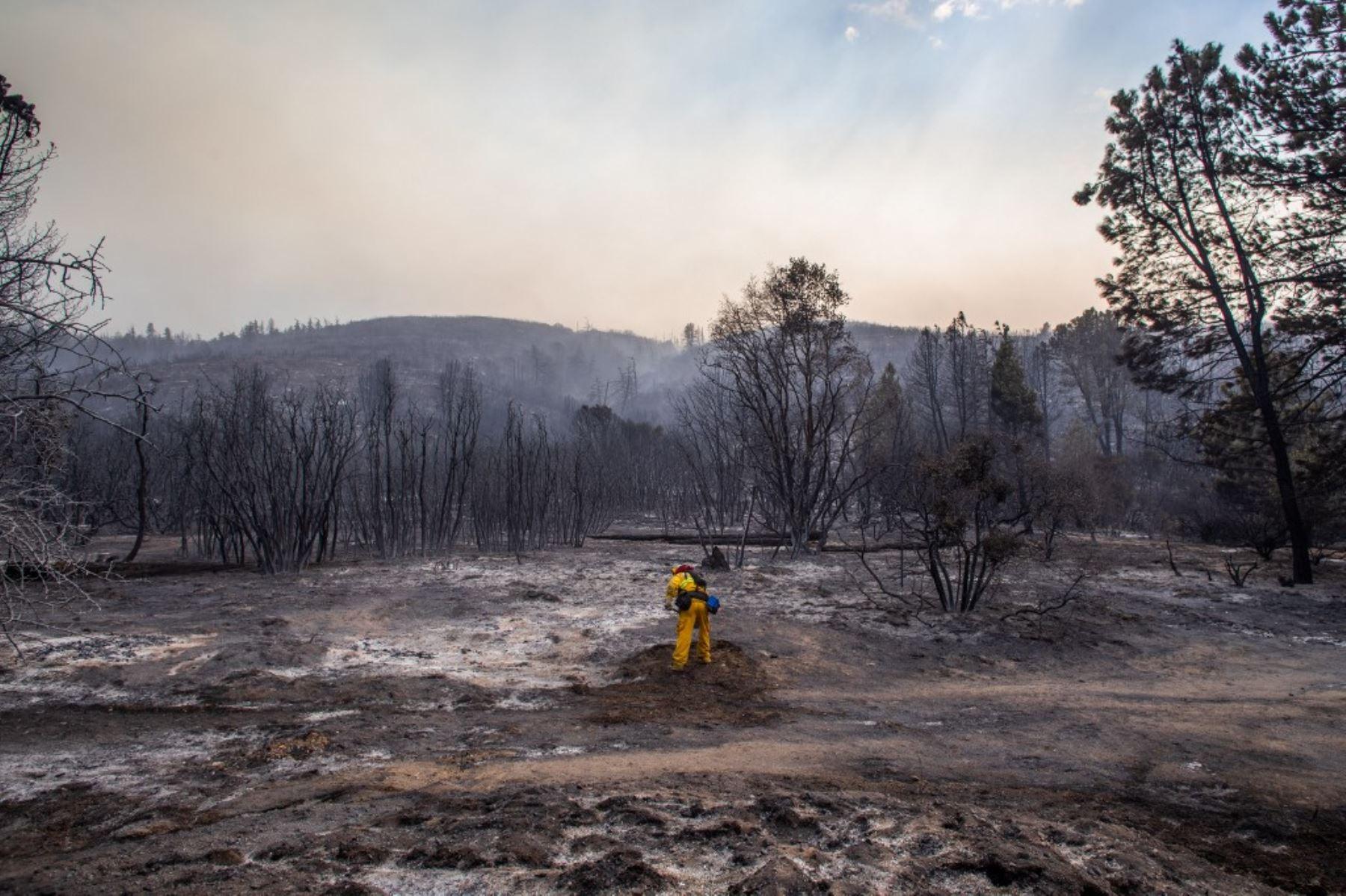 Un bombero trabaja para extinguir un punto de acceso del Lake Fire en Pine Canyon Road en el Bosque Nacional de Ángeles. Foto: AFP