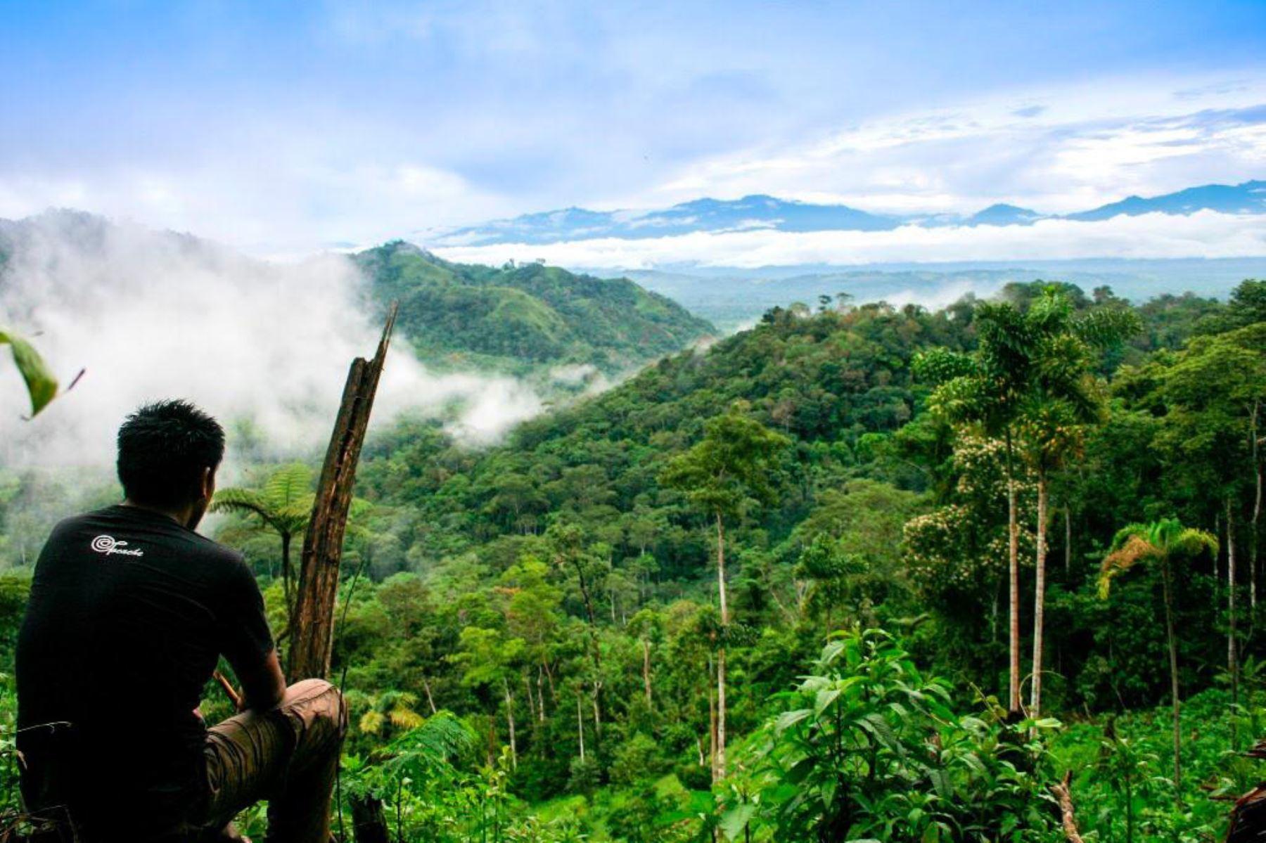 El Minam impulsará el tránsito hacia una economía circular y adoptar soluciones basadas en la naturaleza, como combatir la primera fuente de emisiones de gas invernadero en el Perú que produce la deforestación. Foto: ANDINA/Minam