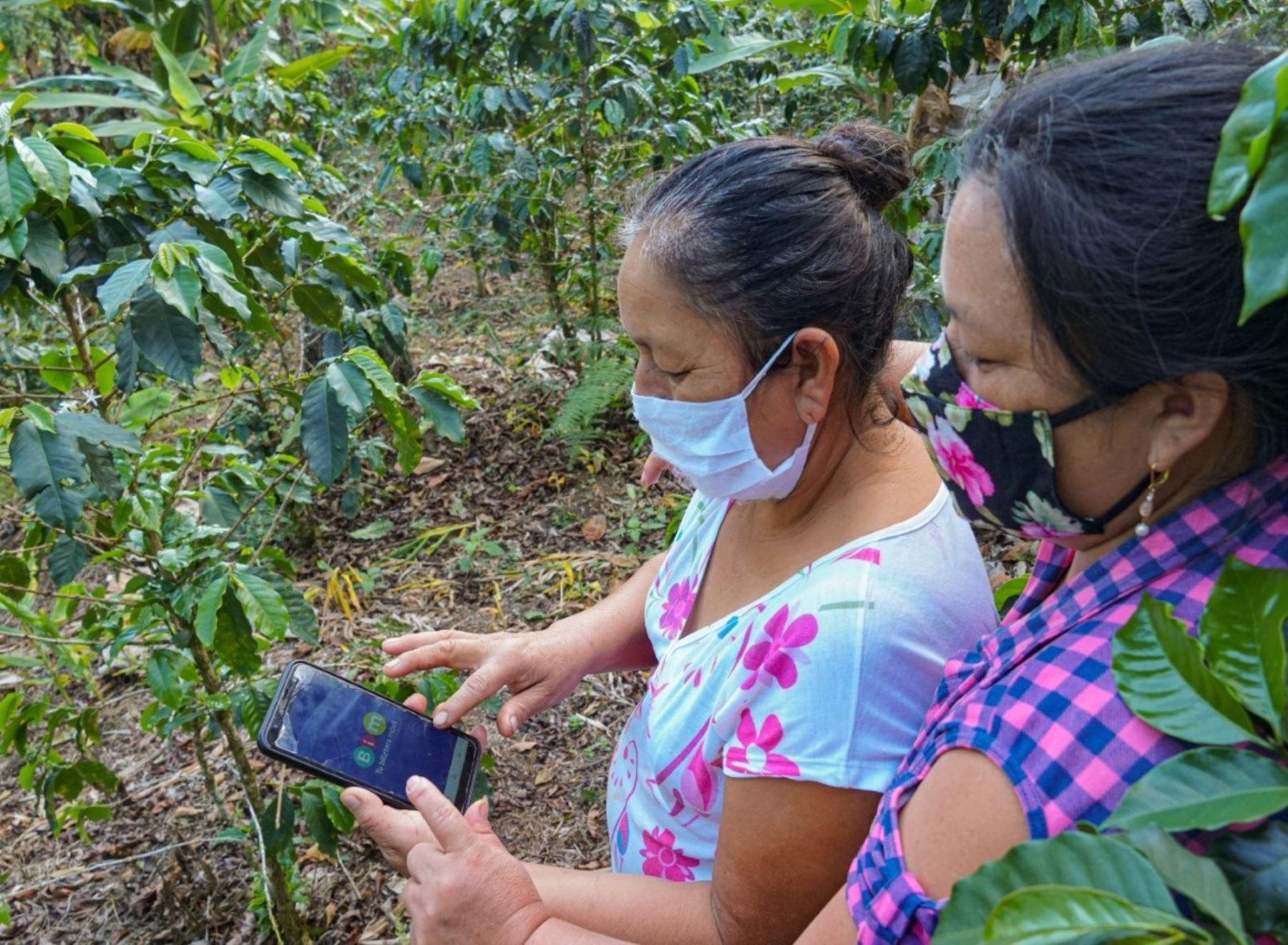 Aplicación móvil facilitará inclusión financiera de productores cafetaleros de la región Huánuco. ANDINA/Difusión