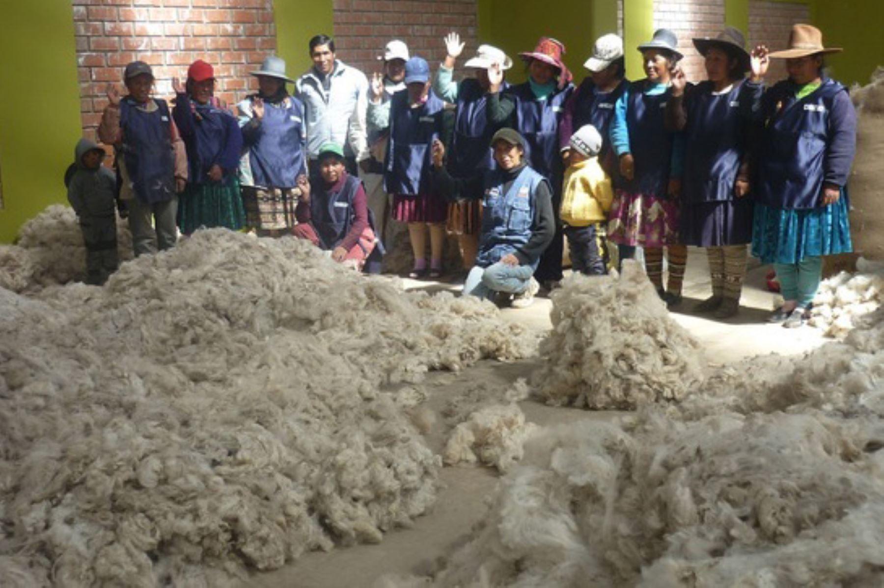Productores de Arequipa introducen fibra de alpaca con calidad genética en mercados internacionales. Foto: Minagri