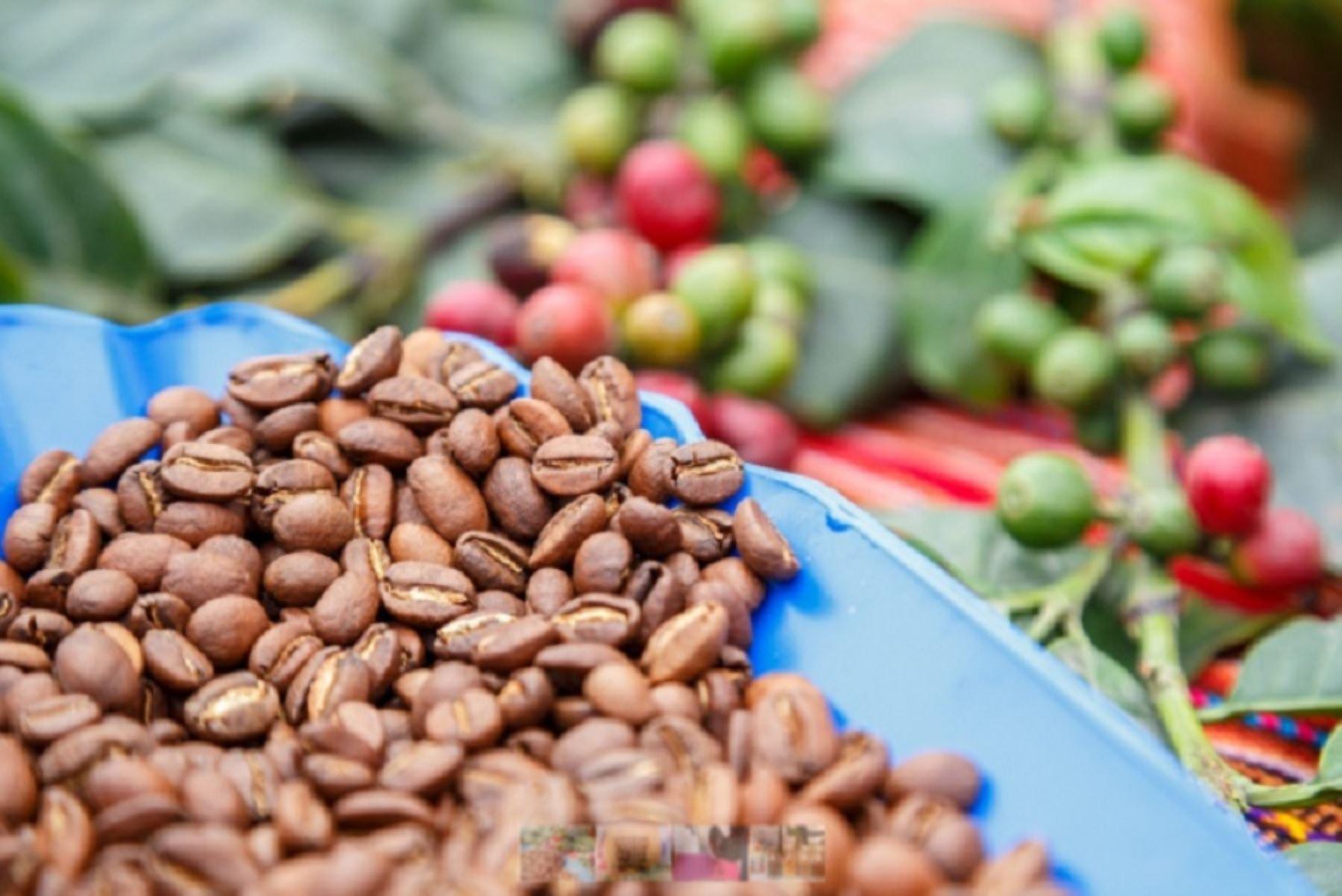 Abonan más de 11,000 has de café con guano de isla para mejorar producción | Noticias