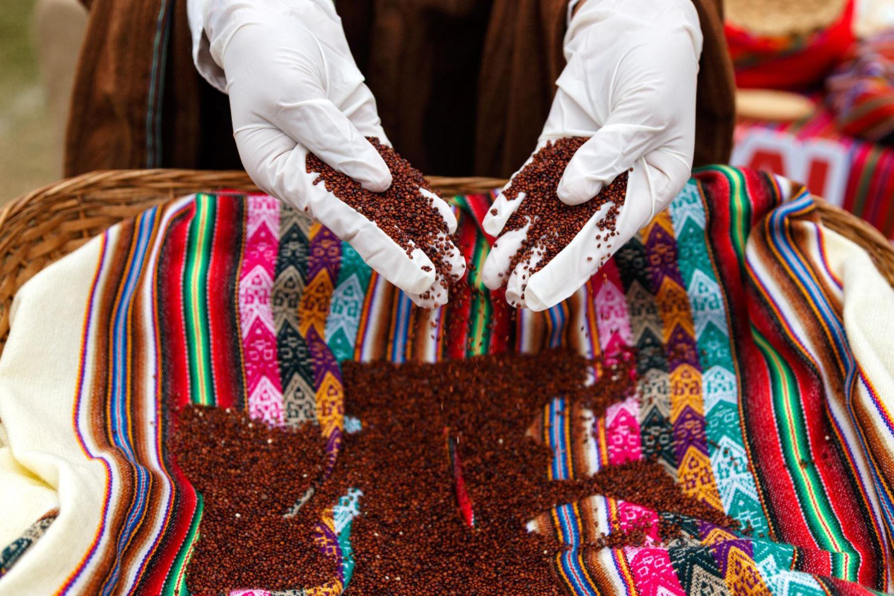 Producción de quinua de agricultores de Cajamarca crece 10 veces con guano de las islas | Noticias