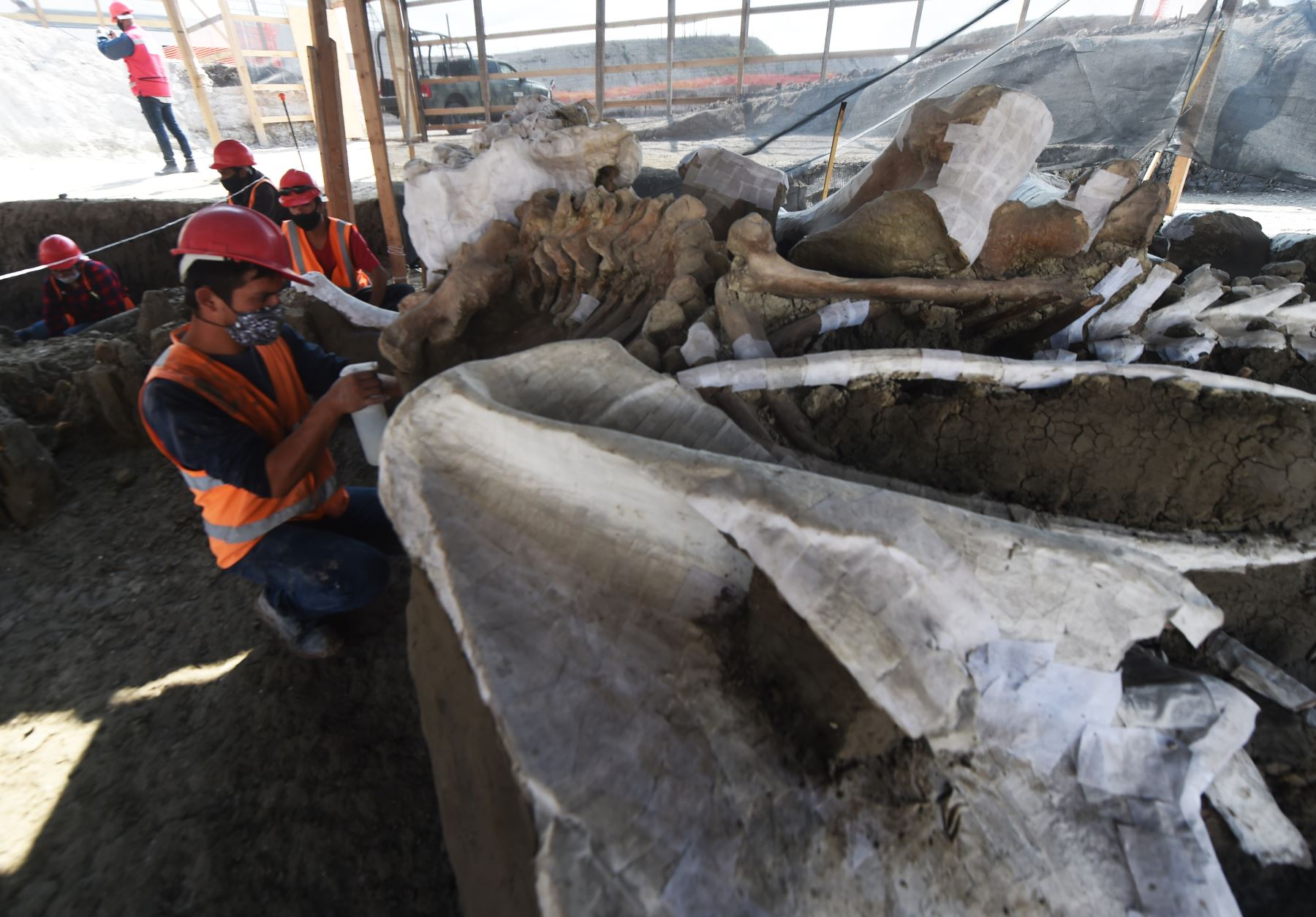 Paleontólogos del Instituto Nacional de Antropología trabajan en la preservación de los esqueletos de mamuts hallados en la base militar Santa Lucía, en Zumpango, México. Foto: AFP.