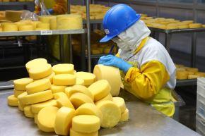 Producción de quesos.Foto: ANDINA/Difusión.