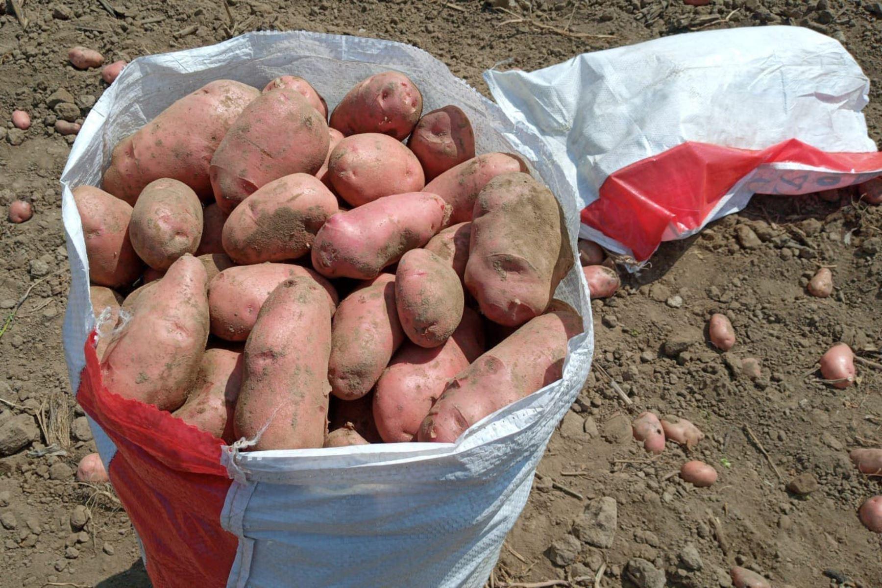 Agro Rural del Minagri,recibio la primera carga de 30 toneladas gracias a las coordinaciones realizadas con la Dirección Regional Agraria de la Región Ica. Foto: Minagri