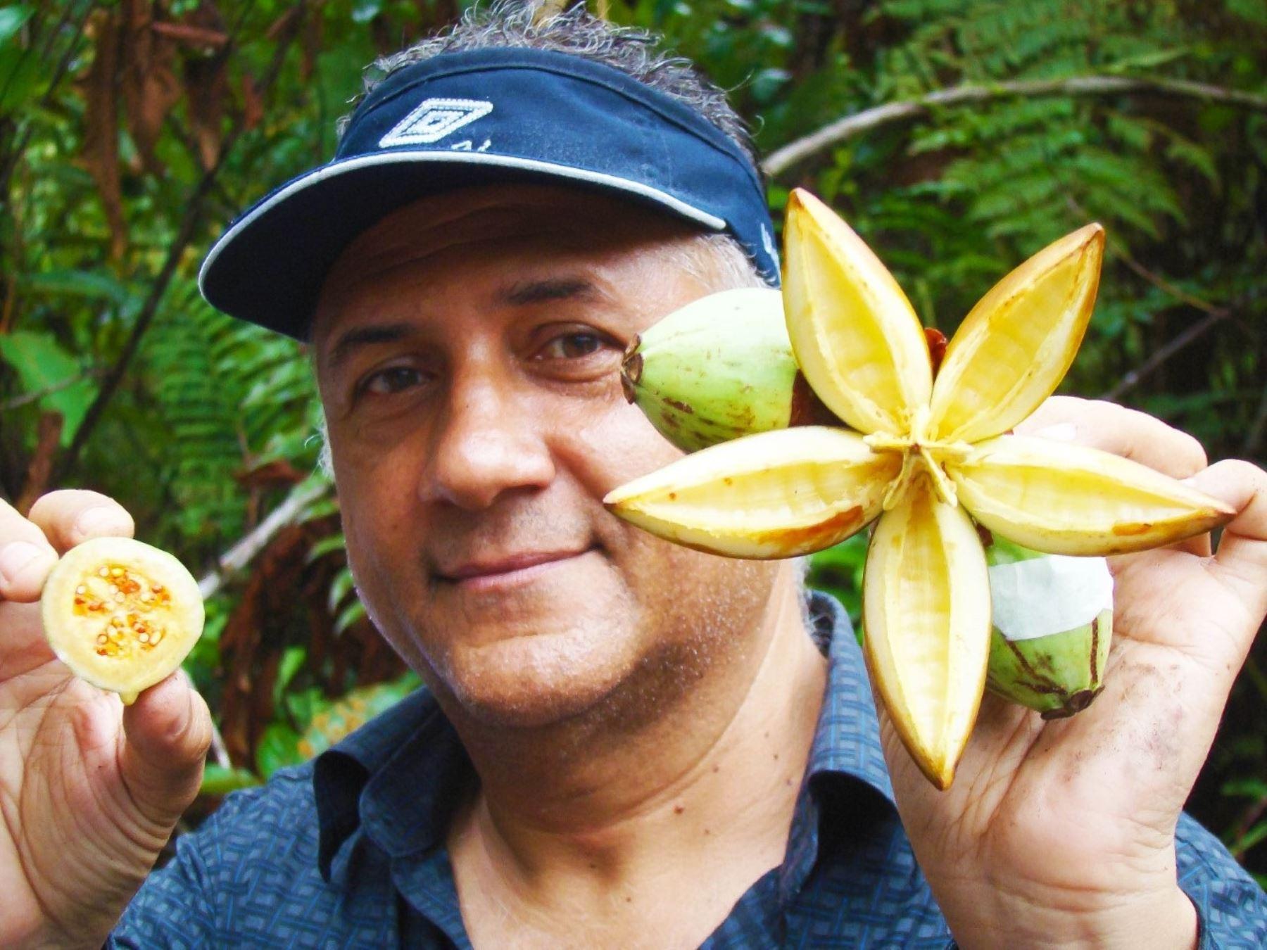 El Serfor firmó un convenio con la ONG Aprodes que autoriza la Investigación de diversas especies de la flora silvestre de Perú, como la Clusia Multiflora (Clusiaceae) para identificar fármacos naturales. Foto: Cortesía Aprodes
