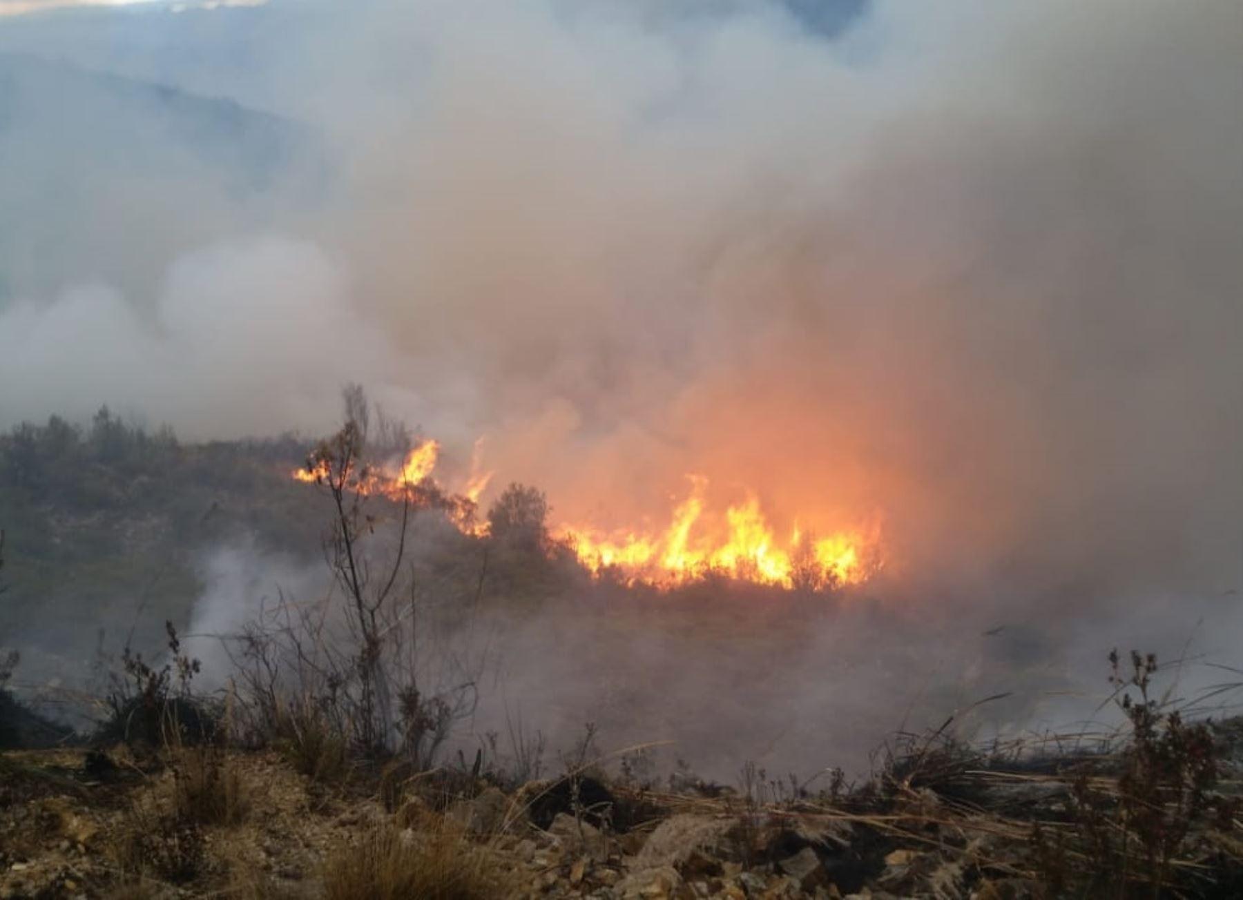 Serfor recibirá apoyo de una organización japonesa para implementar un proyecto que busca prevenir incendios forestales en cinco regiones del país. ANDINA/Difusión