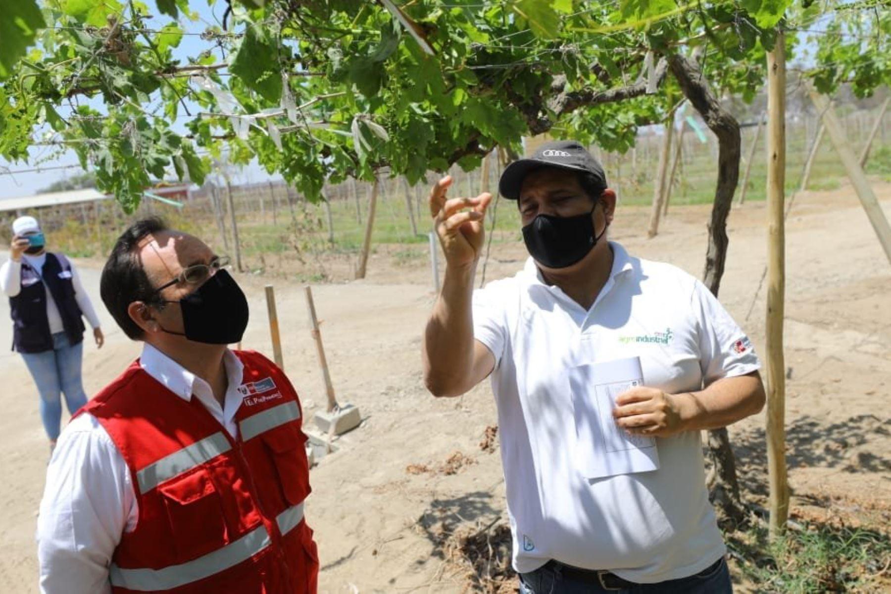 El ministro de la Producción, Jose Salardi, visita el CITE agroindustrial de Ica, a fin de conocer los servicios para el desarrollo de productos innovadores que elaboran los empresarios del sector agroindustrial en la región. Foto:ANDINA/Produce