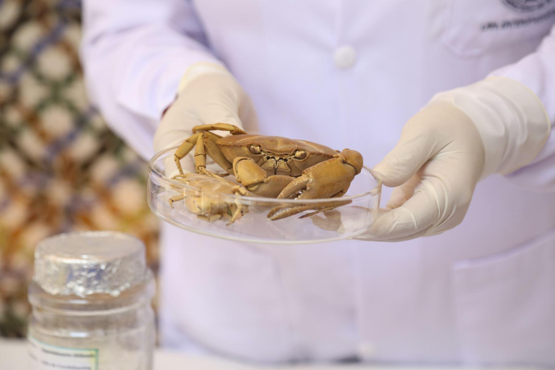El 90% de parásitos intestinales se transmiten a través del consumo de alimentos y bebidas contaminadas. Estos microorganismos se adhieren a la mucosa intestinal y consumen gran cantidad de vitaminas y nutrientes, informó el Ministerio de Salud (Minsa) a través del Instituto Nacional de salud (INS). Foto: Minsa