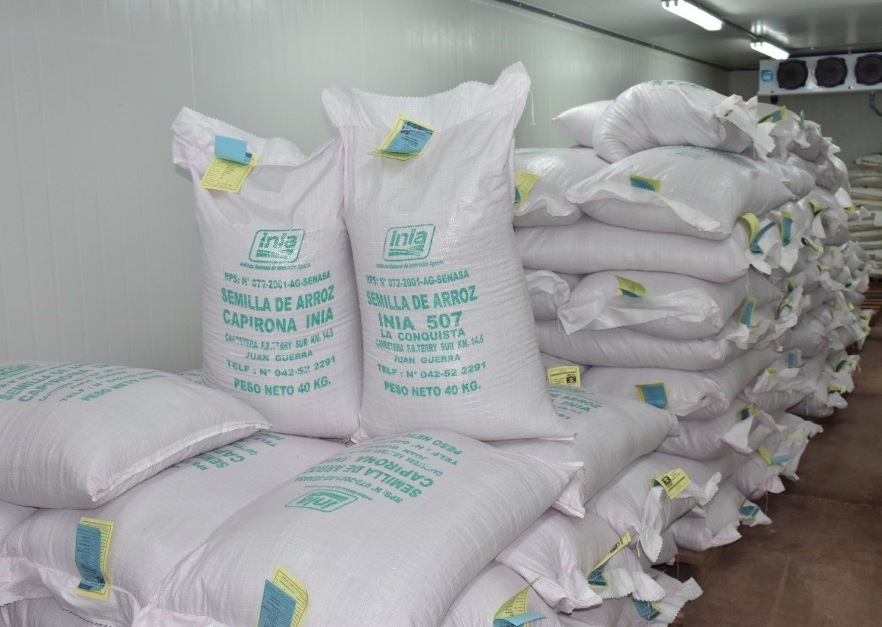 Productores de San Martín acceden a semillas de arroz certificadas y de calidad   Noticias