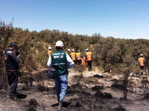 El Serfor reportó que seis incendios forestales se registraron el fin de semana en la región Arequipa. ANDINA/Difusión