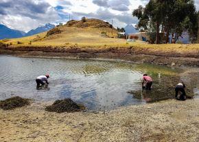 Ancashinos dan el ejemplo y se unen para limpiar la hermosa laguna Wilcacocha, ubicada en el Callejón de Huaylas, en la sierra de esa región. ANDINA/Difusión