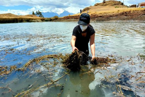 Ancashinos dan el ejemplo y se unen para limpiar la laguna Wilcacocha