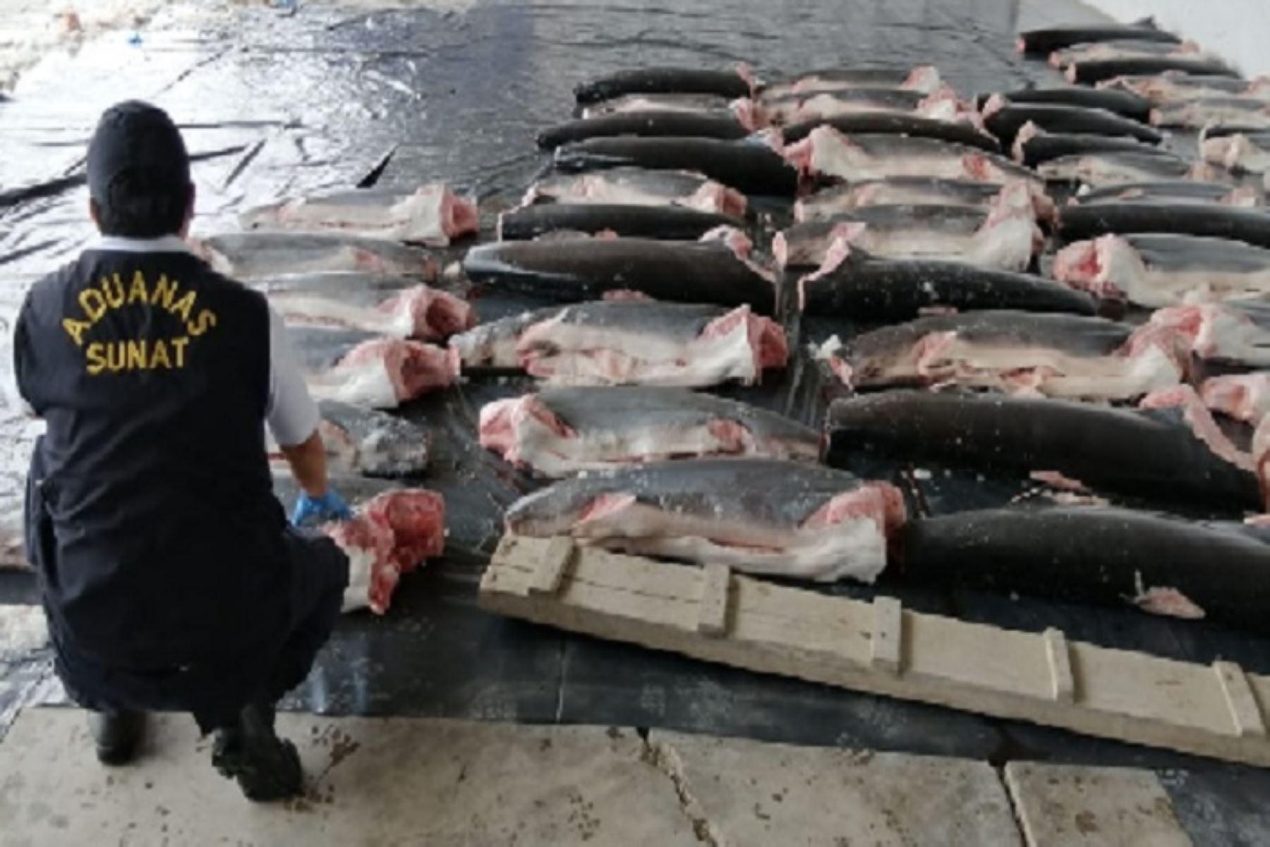 """Entre lo incautado se logró identificar varias especies de tiburón como """"martillo"""", """"zorro ojón"""", """"zorro pelágico"""" y """"diamante"""", especies protegidas internacionalmente."""